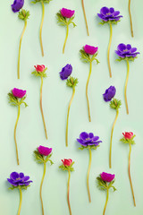Floral background. Anemone flowers on blue