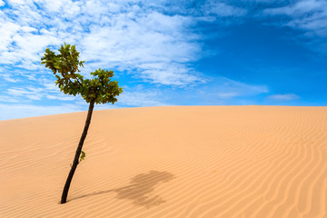 green tree, desert