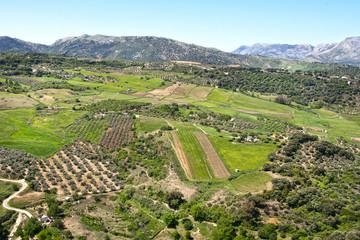 field in Ronda, Spain
