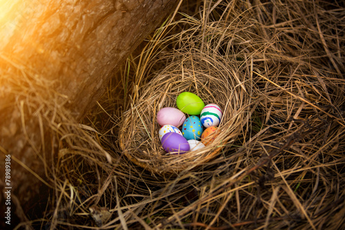 Closeup shot of colorful easter eggs lying in nest at forest - 78989386