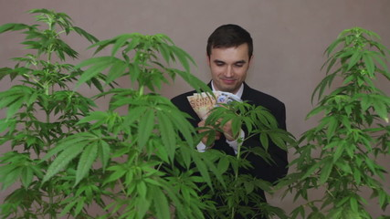 Successful businessman with Cannabis plants