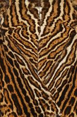 pelliccia di ocelot
