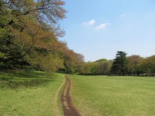 傾斜のある公園の芝生