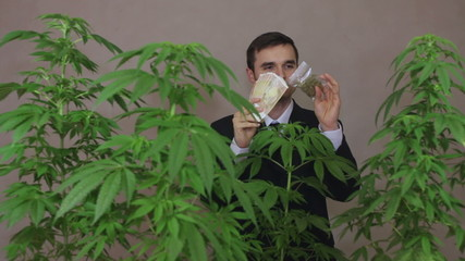 Happy businessman with Marijuana