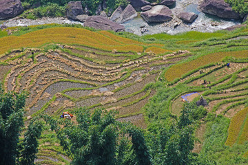 Rice terrace´s in Sapa,Vietnam