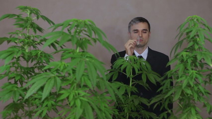Happy businessman with Cannabis plants smoking Marijuana joint.