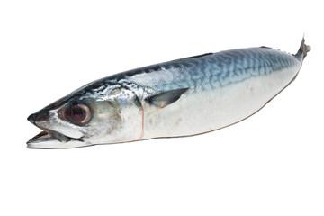 Fresh fish Mackerel, tuna, saba, on a white background