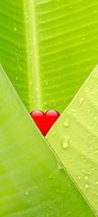 petit coeur rouge dans feuille de bananier enveloppe