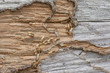 Closeup wood has been damaged eat by termite - 79002956