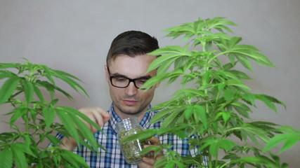 Salesman checking Marijuana product