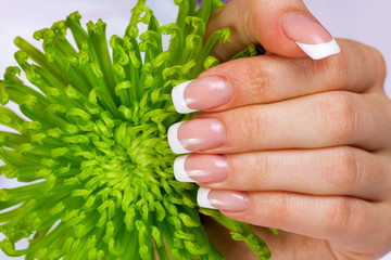 Beautiful female hand with french manicure