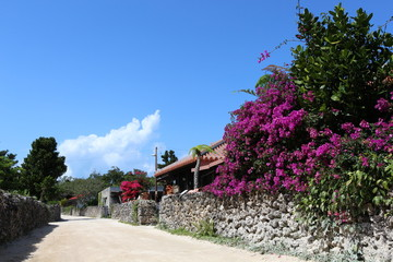 竹富島の白砂道