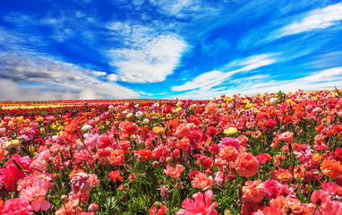Flowers are grown for export