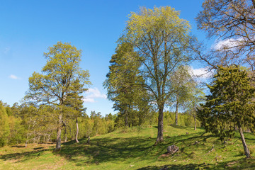 Pasture with trees at spring