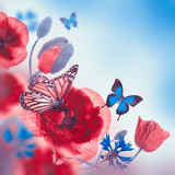 Red poppies field and blue cornflowers, butterfly