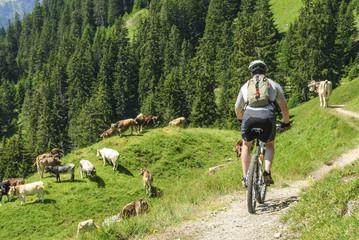 Bike-Tour im Gebirge