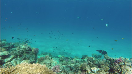 Beautiful underwater landscape with fish swim among corals in th