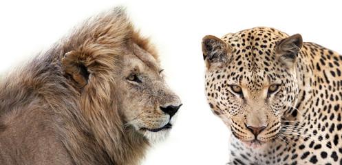 Leone e Leopardo insieme