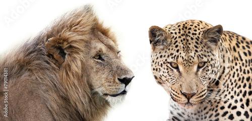 Fotobehang Luipaard Leone e Leopardo insieme