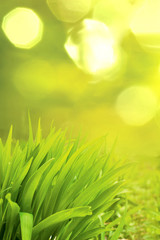 grass on a green background