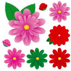 Big Colorful Gerbera Flowers Set, Vector Illustration, Gerbers