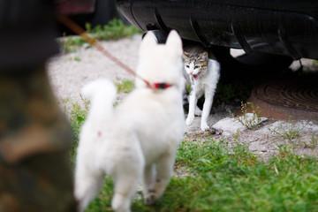 Puppy frightened cat