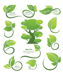 vector collection of leaf frames, labels and stickers..