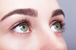 female eye zone and brows with day makeup - 79024306