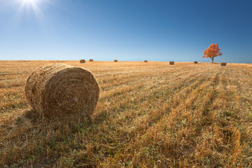 Field with haystacks after the harvest of wheat