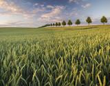 Panorama wiosennego pola