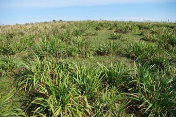草原の斜面