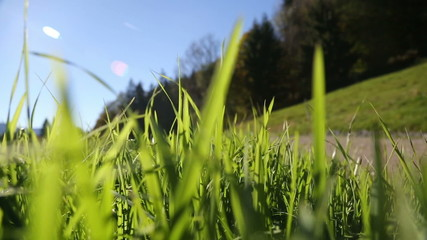 Camera moving through green grass in the Alps mountains