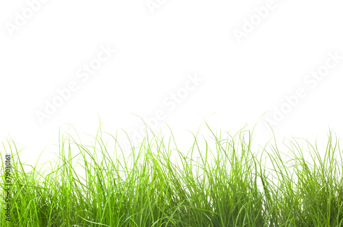 canvas print picture Grass