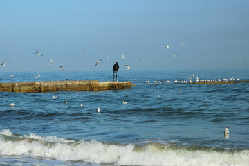 Young man feeding seagulls on the sea