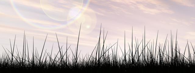 Black grass over sky sunset banner