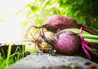 various of Red beet over garden background