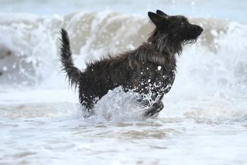 Rennen im Meer