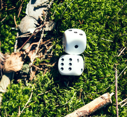 Dice game in the nature
