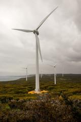 Wind farm view near Albany