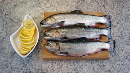 Trout ready for processing kitchen