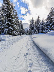 Winter forest, snow-covered path through the forest