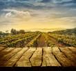Vineyard design - 79046390