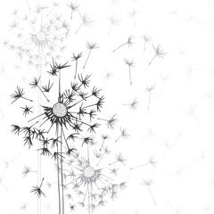 Dandelions . Hand-drawn floral background,  monochrome vector il