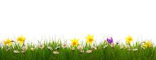 """Постер, картина, фотообои """"Green grass and colorful spring flowers."""""""