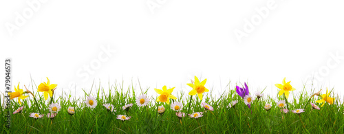 Staande foto Narcis Green grass and colorful spring flowers.