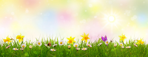 Green grass and colorful spring flowers.