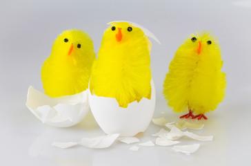 3 Küken schlüpfen aus dem Ei