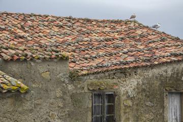 Gaviotas sobre tejado