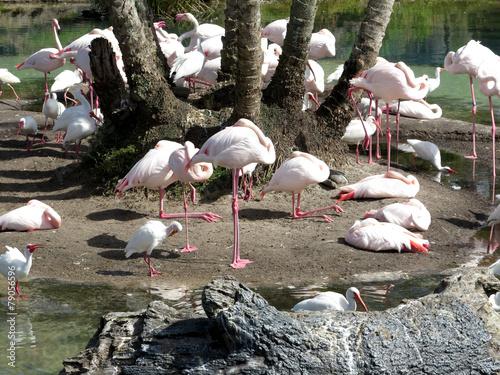 Foto op Aluminium Flamingo Group of Flamingos