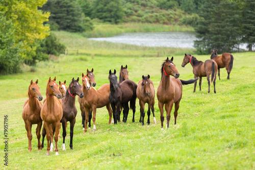 Spoed canvasdoek 2cm dik Paarden horse herd